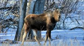 Animals In Winter Wallpaper Download