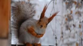 Animals In Winter Wallpaper For Desktop