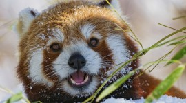 Animals In Winter Wallpaper For PC