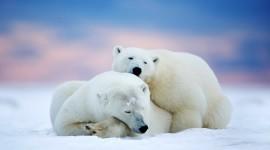 Animals In Winter Wallpaper Free