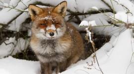Animals In Winter Wallpaper Full HD
