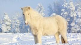 Animals In Winter Wallpaper HQ#2