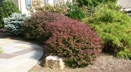 Barberry Wallpaper Gallery