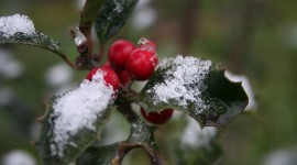Berries In The Snow Photo