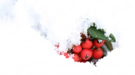 Berries In The Snow Photo Download