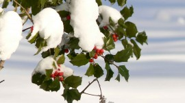 Berries In The Snow Wallpaper Free