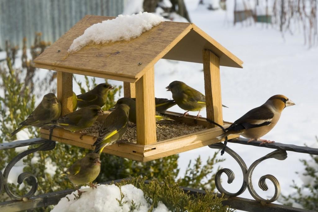 Bird Feeders wallpapers HD