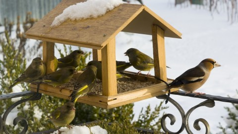 Bird Feeders wallpapers high quality