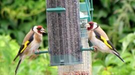 Bird Feeders Desktop Wallpaper