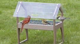 Bird Feeders Desktop Wallpaper HD