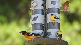 Bird Feeders Photo Download