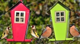 Bird Feeders Wallpaper 1080p