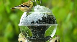 Bird Feeders Wallpaper
