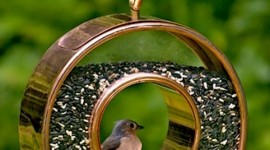 Bird Feeders Wallpaper For Android
