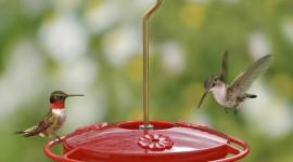Bird Feeders Wallpaper For Desktop
