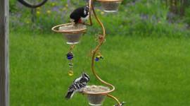 Bird Feeders Wallpaper For IPhone