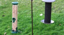 Bird Feeders Wallpaper For IPhone#1
