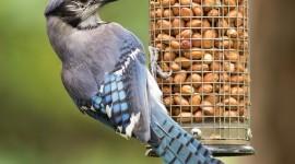 Bird Feeders Wallpaper For Mobile