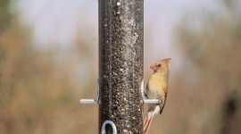 Bird Feeders Wallpaper For Mobile#1