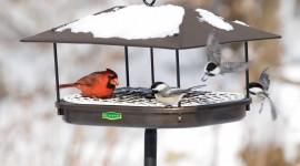Bird Feeders Wallpaper Free