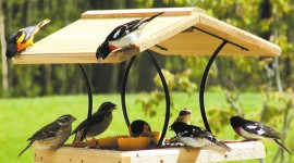 Bird Feeders Wallpaper Gallery