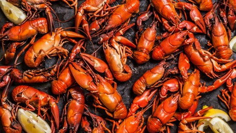 Boiled Crawfish wallpapers high quality