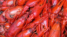 Boiled Crawfish High Quality Wallpaper