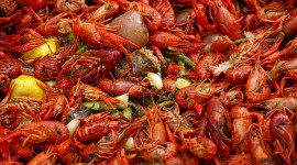 Boiled Crawfish Wallpaper