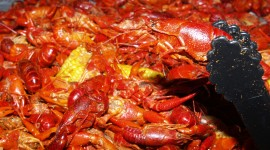 Boiled Crawfish Wallpaper Background