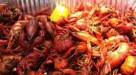 Boiled Crawfish Wallpaper For Desktop