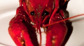 Boiled Crawfish Wallpaper For IPhone Free