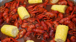 Boiled Crawfish Wallpaper Free