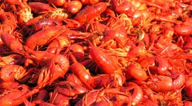 Boiled Crawfish Wallpaper Gallery
