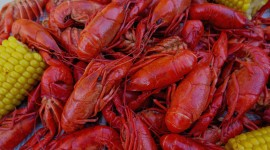 Boiled Crawfish Wallpaper HQ
