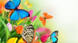 Butterfly Frames Photo