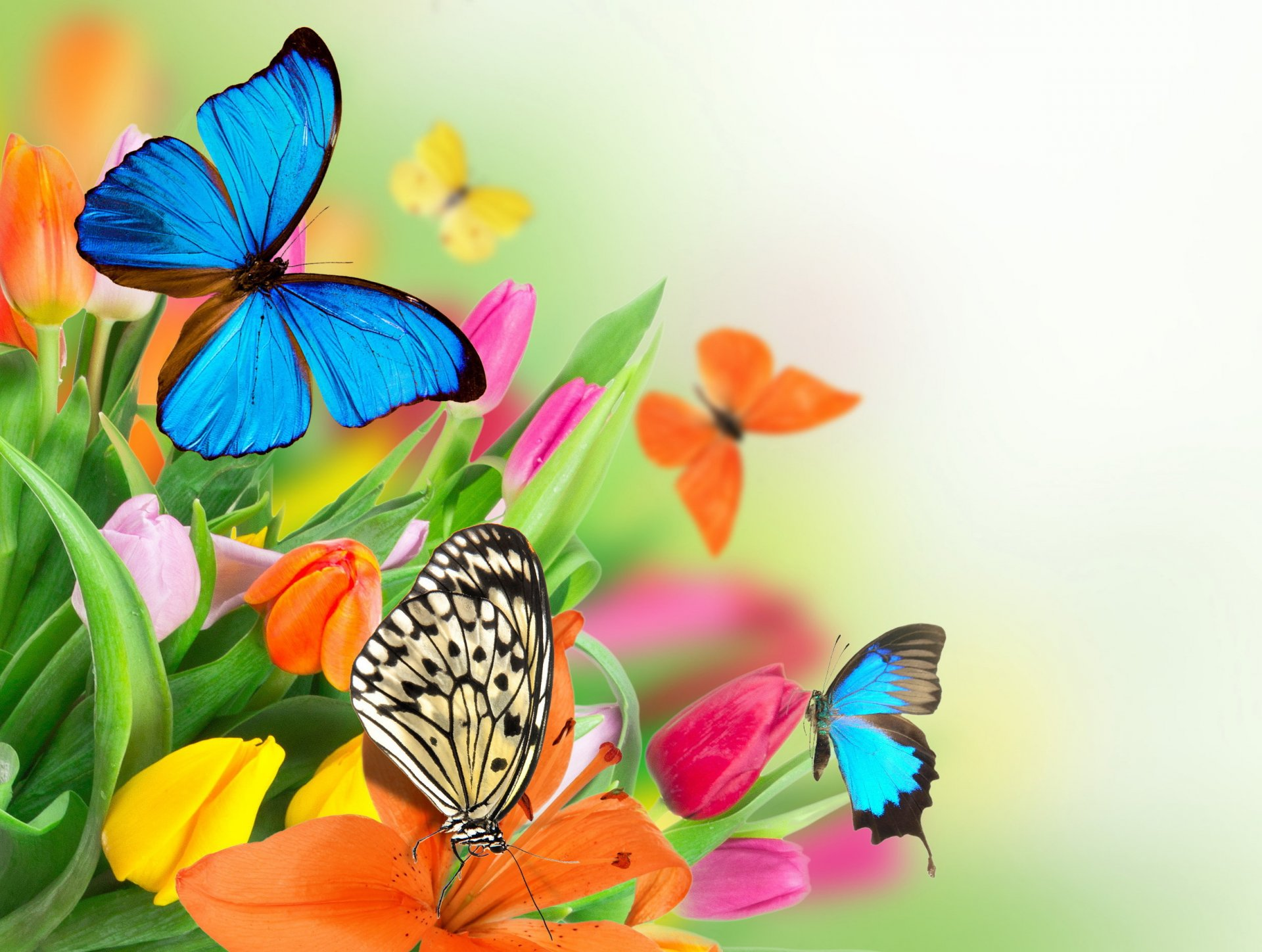 Free Colorful Flower Desktop Wallpaper: Butterfly Frames Wallpapers High Quality