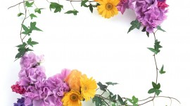 Floral Frame Picture Download