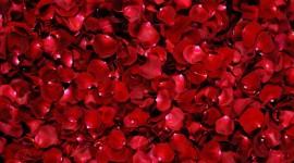 Flower Petals Desktop Wallpaper