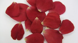 Flower Petals Desktop Wallpaper For PC