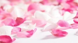 Flower Petals High Quality Wallpaper