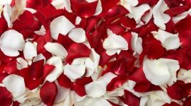 Flower Petals Wallpaper 1080p