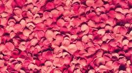 Flower Petals Wallpaper