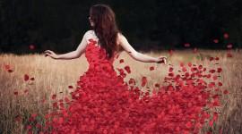 Flower Petals Wallpaper Download