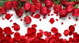 Flower Petals Wallpaper Download Free