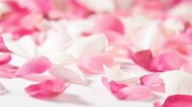 Flower Petals Wallpaper For Desktop