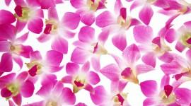 Flower Petals Wallpaper Free