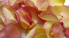 Flower Petals Wallpaper Full HD