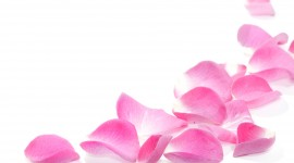 Flower Petals Wallpaper HD