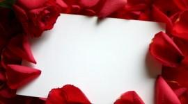 Flower Petals Wallpaper HQ