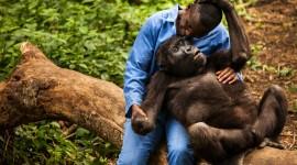 Gorillas Wallpaper 1080p#1